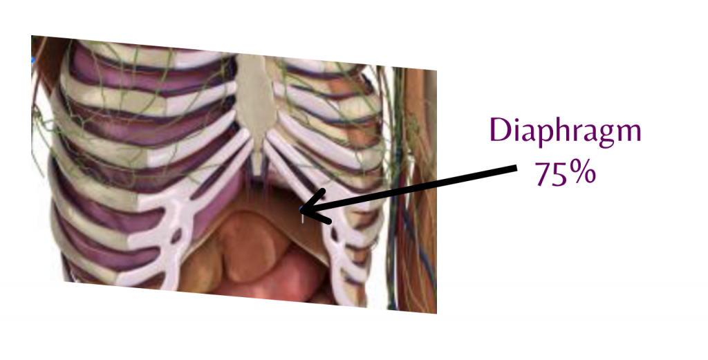 breath work diaphragm