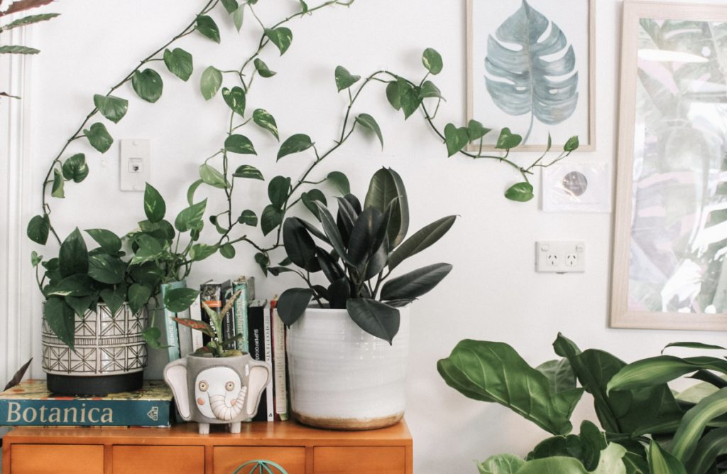plants for your home meditation space